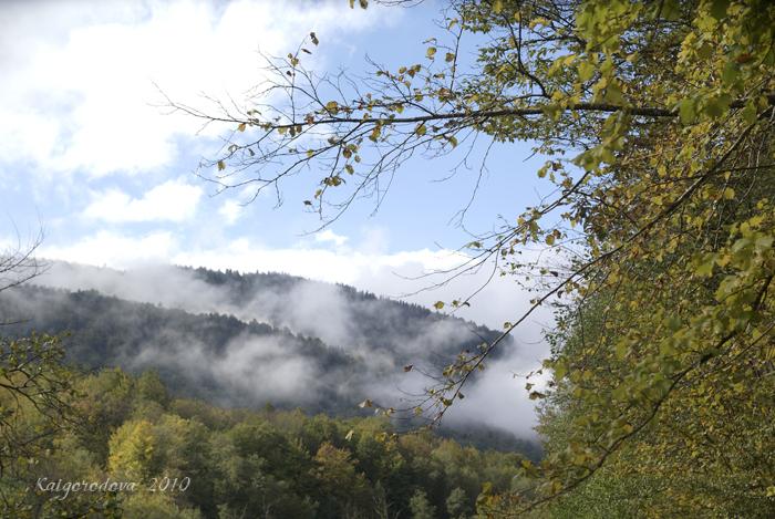 Облака и желые листья