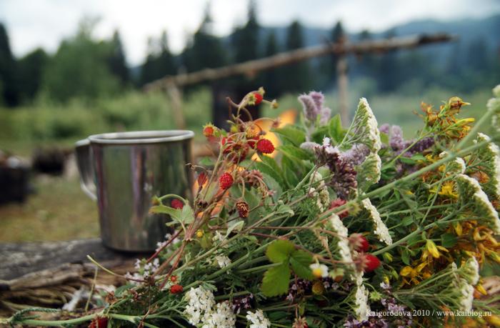 Горный чай из земляники, чебреца и других трав