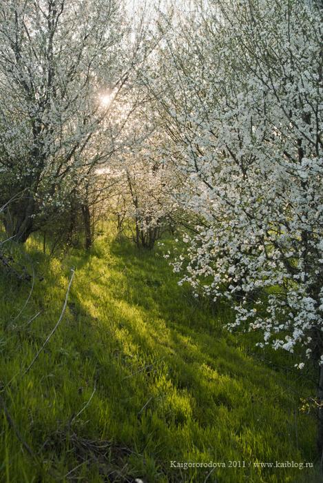 Цветение на Кубани