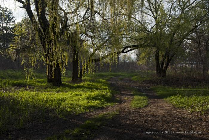Утренний свет весной