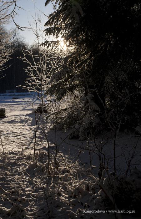 Утро зимой