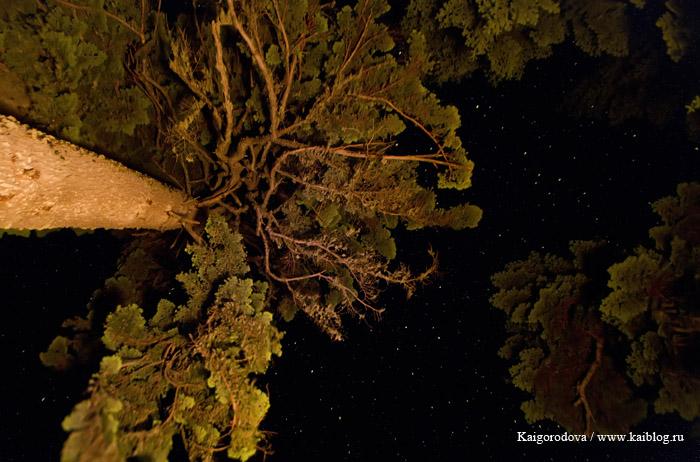 Фотография ночью
