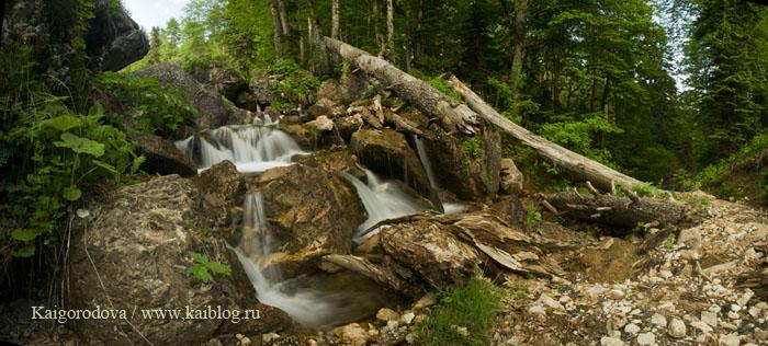 В лесу Кавказа