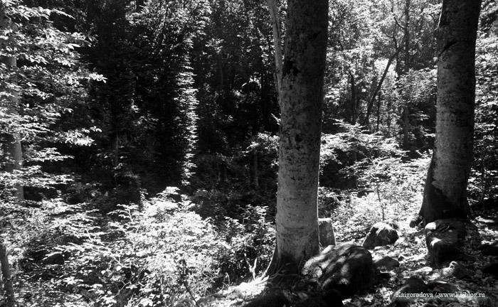 Лес Северского района