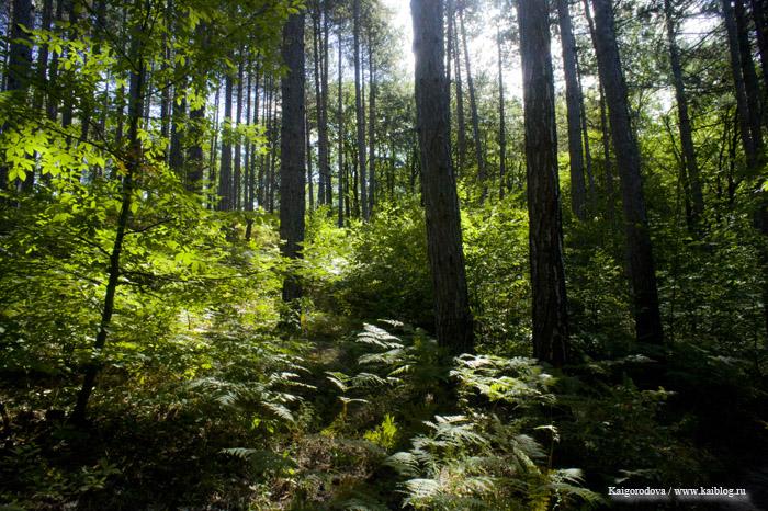 Лес в Горячем Ключе