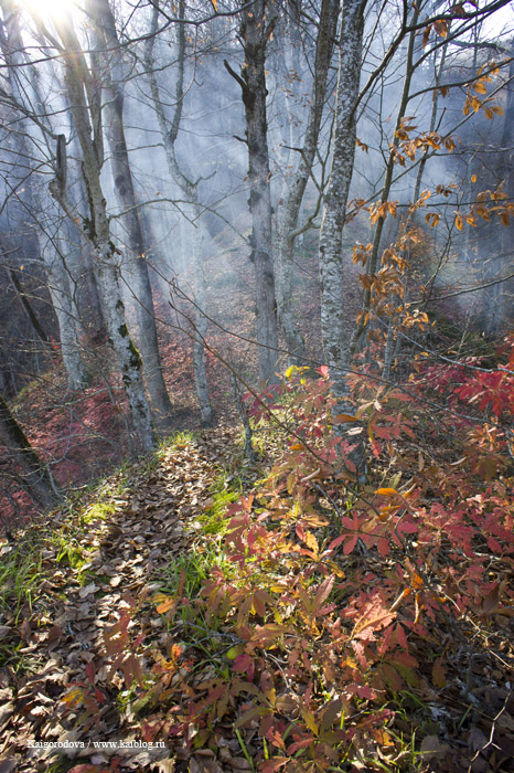 Ноябрь в лесу