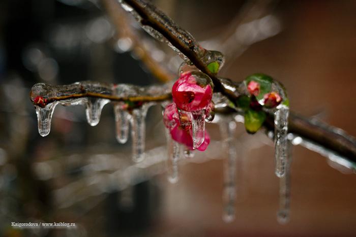Ледяная корка