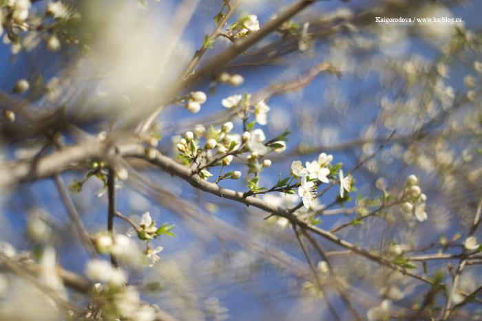 весна в краснодаре