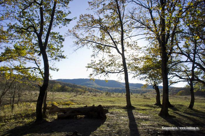 шапошникова поляна с видом на хребет Котх